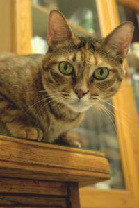 Как избавиться от запаха кошачьей мочи на обуви